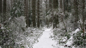 013 Bryant's Trail '13